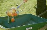 Äppelplockare Pompe